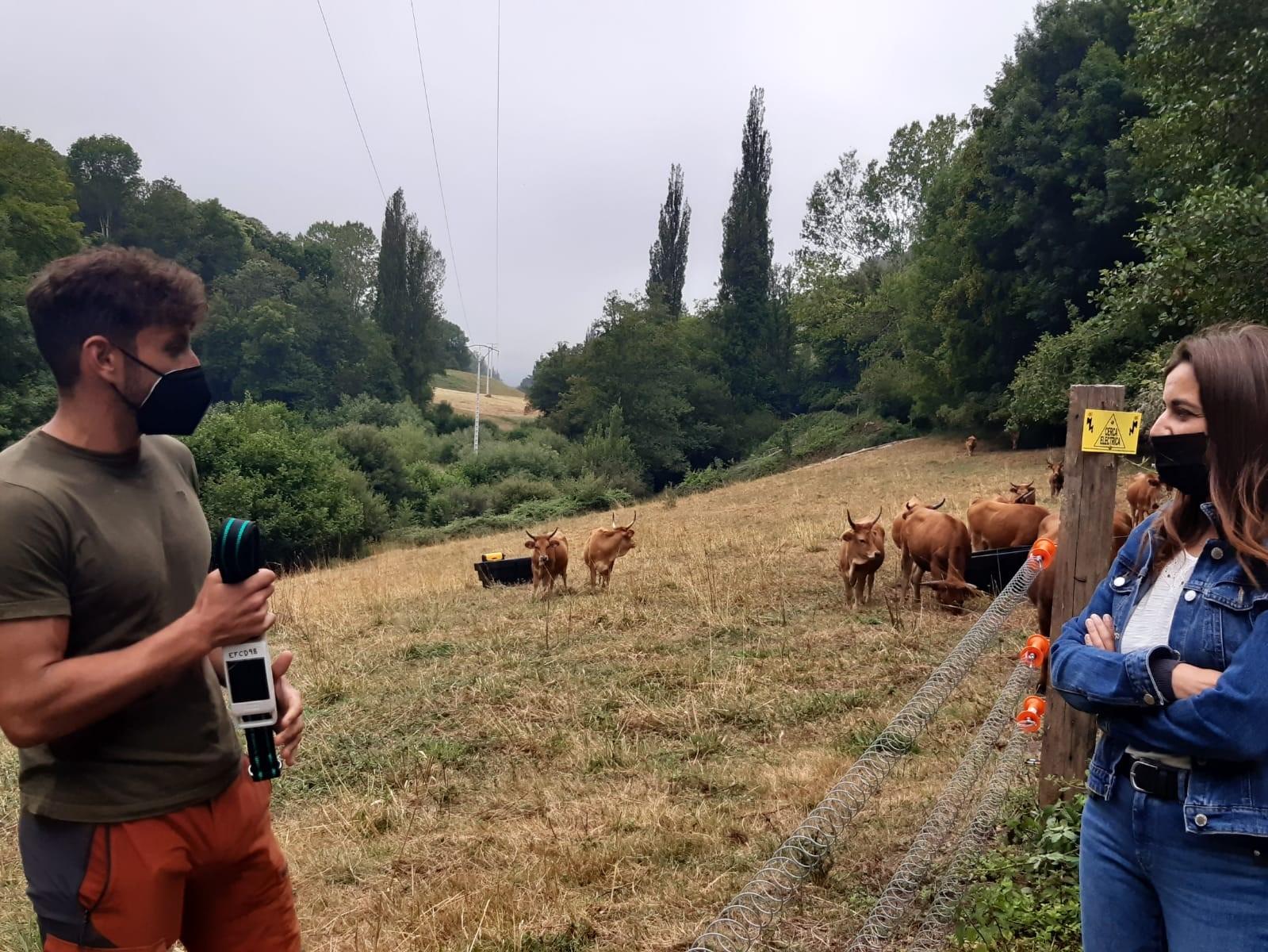 La Xunta valora la posibilidad de implantar un sistema basado en el internet de las cosas para la gestión de la ganadería extensiva en las aldeas modelo